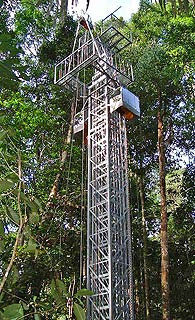 pic : a tower bulid in Jungle(1999)